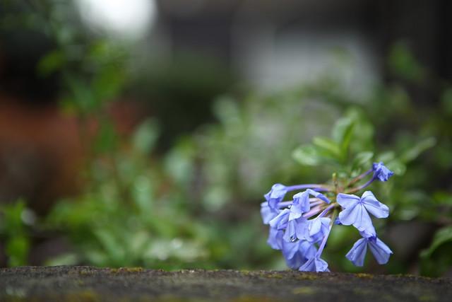 花先の水滴