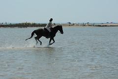Plage de Pimanson, Salin-de-Giraud (jacqueline.poggi) Tags: horse mer france beach cheval plage camargue mditerrane salindegiraud pimanson