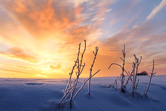 golden day (Youronas) Tags: pink schnee light red sky orange sun sunlight snow plant cold ice nature clouds sunrise canon germany landscape bayern deutschland bavaria licht sticks frost december purple crystal dusk natur pflanze himmel wolken frosty franconia 7d dmmerung franken kalt eis twigs landschaft sonne sonnenaufgang daybreak snowcovered flur frostig morgendmmerung sonnenlicht eiskristall stngel 1585