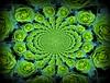 Euphorbia with water drops (sylkky2) Tags: plants macro verde green bokeh euphorbia waterdropmacro top30green
