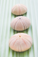 Sea urchins on a palm leaf (Alex Bramwell) Tags: pink stilllife detail nature leaf shell palm tropical seashell seaurchin