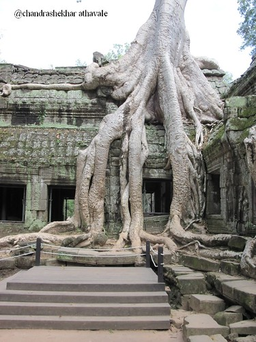 ta prohm  trees 1
