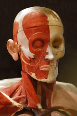 (Rosebud 23) Tags: anatomy