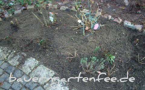 Vorgartenbeet, 17.1.2011