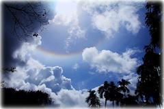 Sky and trees (A. AL-ABDULLAH) Tags: blue trees sky sun clouds شمس اشجار سماء سحاب زرقاء