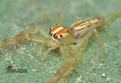 little spider (mat nayie) Tags: eyes many watching manyeyes