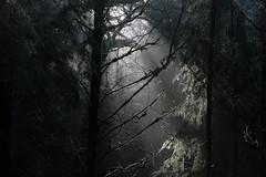 light (Lets Bike It (Howard D Mattinson in Canonbie)) Tags: trees winter light cold dark scotland frozen frost stock valley sunbeam stockphoto stockphotography dumfriesshire canonbie stockfoto byreburn hdmattinson howarddmattinson