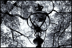 LONDON - HYDE PARK - GAS LAMP - 1966 OR 1967 (Richard Dargan) Tags: monochrome london gaslamp mantles glass edwardian castiron trees leaves branches crown