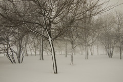 P2021274 (easteighth) Tags: park chicago hyde blizzard frontpage 2011
