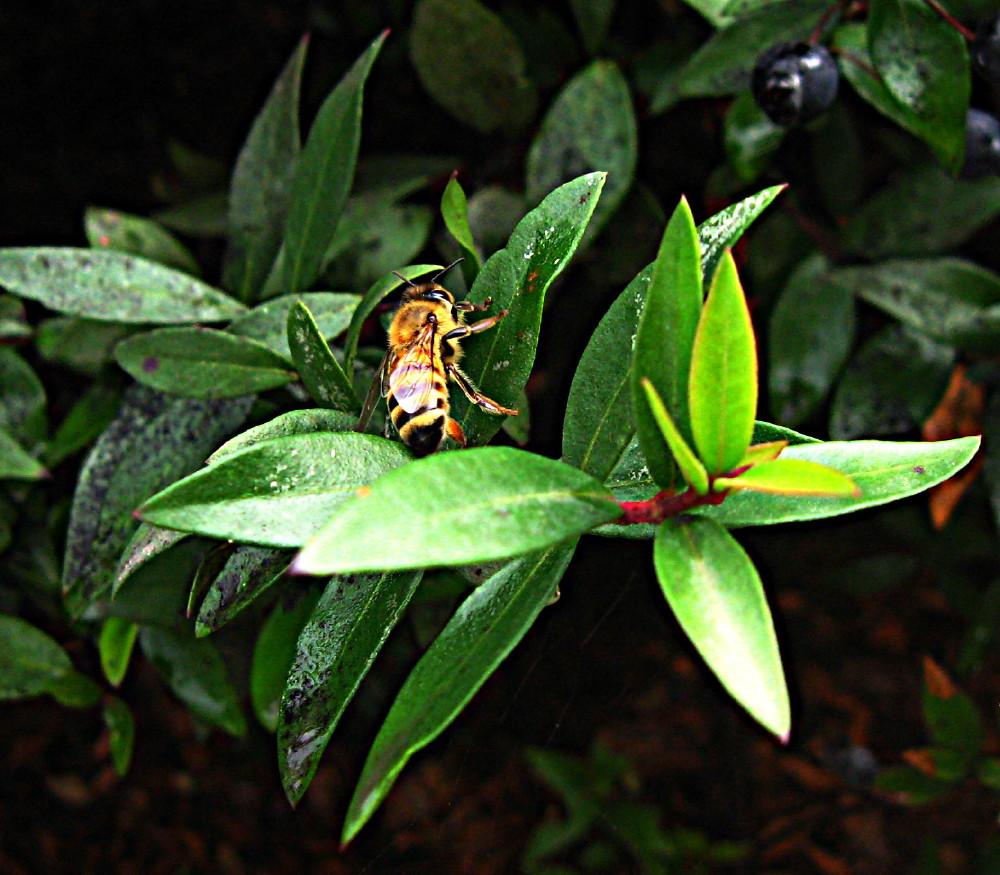 05-02-2011-shining-bee