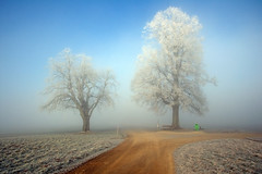 Morning Glory (ceca67) Tags: road morning trees winter light nature landscape switzerland nikon glow path aargau svetlana 2011 d90 ceca imagepoetry naturepoetry impressedbeauty absolutelystunningscapes daarklands oracope selectbestexcellence sbfmasterpiece fleursetpaysages llitedespaysages