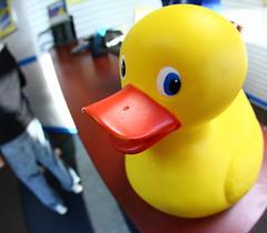 """Wanna buya' Duck??"" (Just George 2) Tags: orange yellow toy iso3200 duck distorted humor gs canonef15mmf28fisheye canoneos5dmarkii mygearandme"