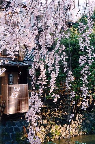 shirakawa creek blog20101230_5093