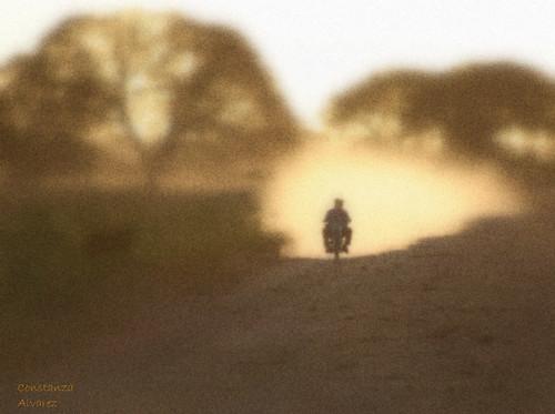 Polvo del camino