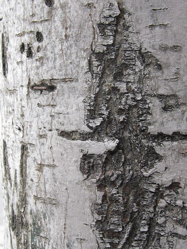 Old Tree Bark Pattern