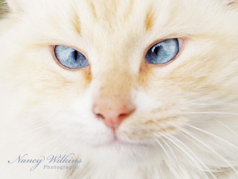 46/365 blue eyes