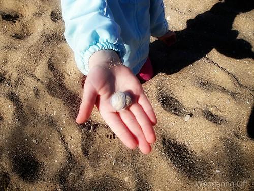 Texas shells