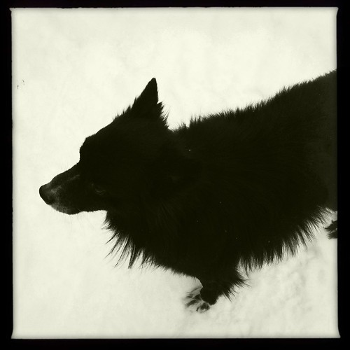 Dogs in the snow, 4 of 4: Ralph