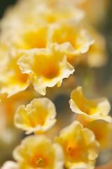 IMG_3593 (Scott Alan McClurg) Tags: plant flower macro art yellow closeup garden close fine petal