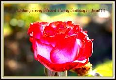Happy Birthday, Joan!!! (maorlando God kept us 2014 leaning on Him 2015) Tags: flower macro nature rose bokeh greeting happybirthdayjoan