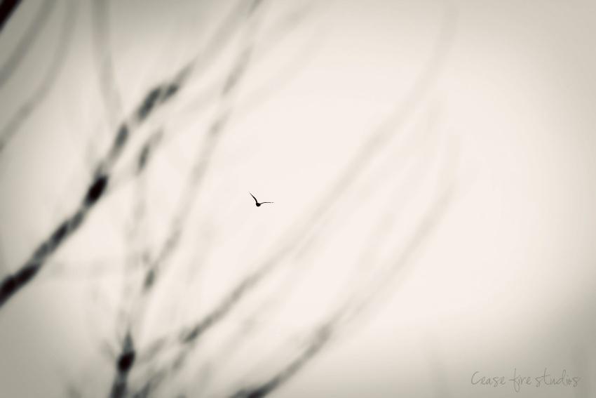 02-21-fly
