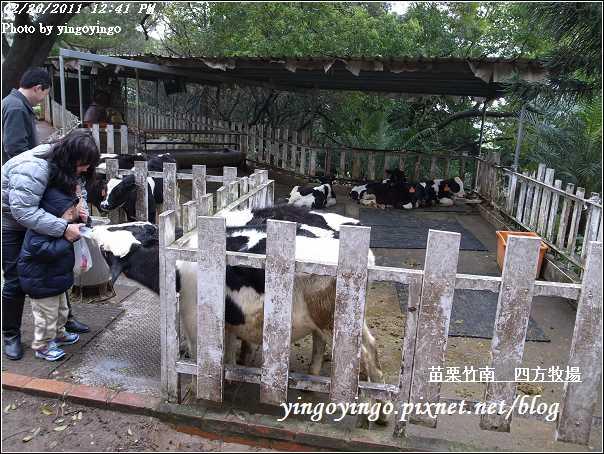 苗栗竹南_四方牧場20110220_R0017956