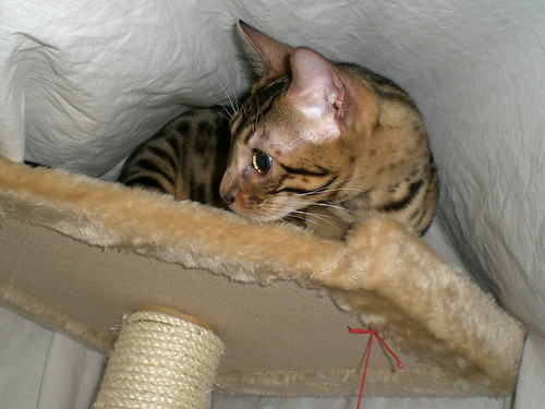 KittyFort06