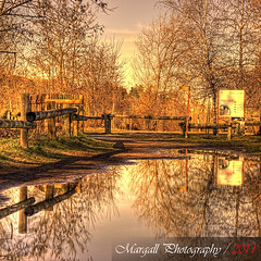 Reflections after the rain - HDR - Cuneo - Italy - Meyer Optik 50mm f1,8 M42 (Margall photography) Tags: light italy photoshop fence reflections photography gold warm italia 4 piemonte pro marco tones cuneo hdr topaz adjust photomatix galletto margall cs5 mygearandme