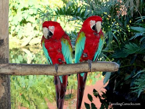 Parrots Punta Cana, Dominican Republic