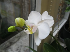 Immagine (annamaria.f) Tags: ufficio fioritura