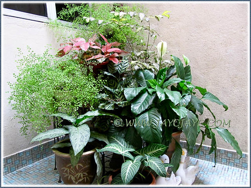 Mostly foliage plants at our courtyard