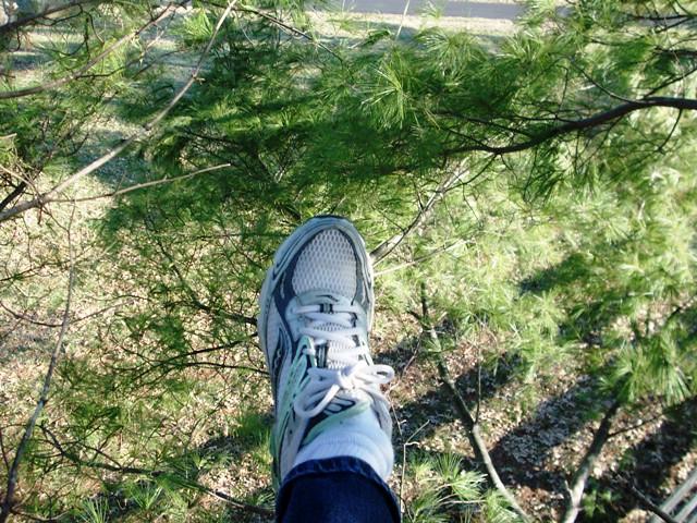 tree climbing 048