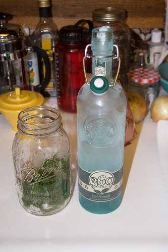 Making Fennel Frond Vodka