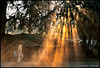 Morning On The Street (bnilesh) Tags: street morning light people india rays indore dust beams