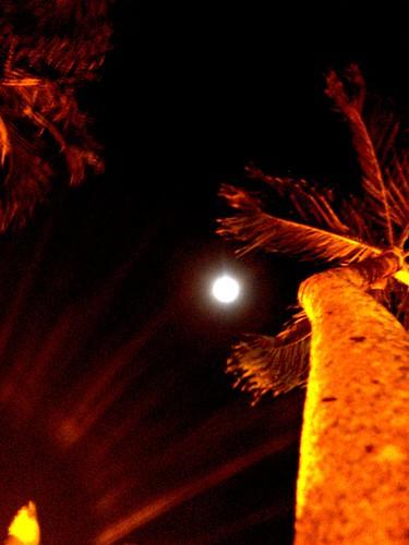 Eclipse 21 deciembre 2010 T