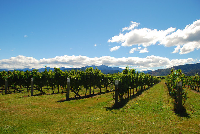 Marlborough Region, New Zealand