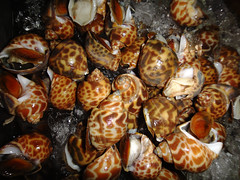Maeklong Market, Live Babylon Snails, Babylonia spirata (Diana B.) Tags: thaifood foodvendor dianab thaimarket babyloniaspirata babyloniidae maeklongstation maeklongmarket traingoesthroughmarket babylonsnails
