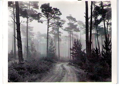 ansel adams photography road. Road and Fog, Ansel Adams