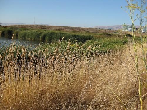 1. Wetlands