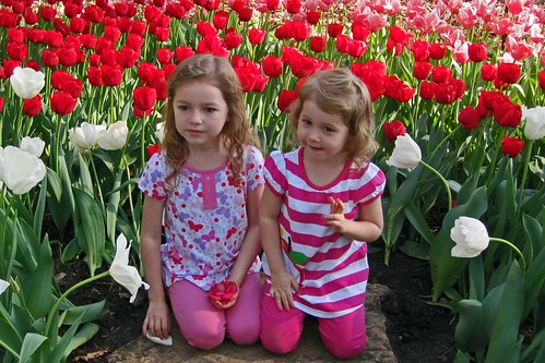 Tulip Girls