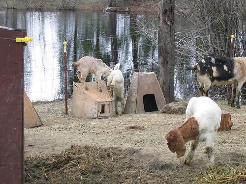 Roberts' Farm (48)