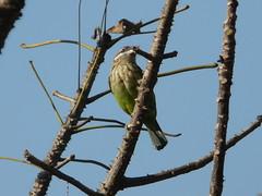P1150296 (babsybou) Tags: travel india birds silent watching kerala du valley yatra sud inde attapadi birdswatching babsybou malleeshwaramjunglelodge pettickal