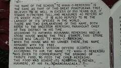 Te Waha O Rerekohu - World's Biggest Pōhutukawa