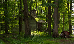 Cabin and Woods