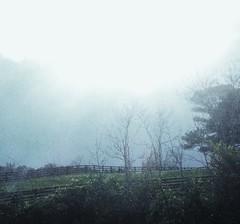 tender (LauraSorrells) Tags: blue light mist field fence digitalplay soft jasper joy meadow nostalgia edge april tender tenderness springtime dreamscape 2010 lightplay janehirshfield mineralspringsroadmeadow