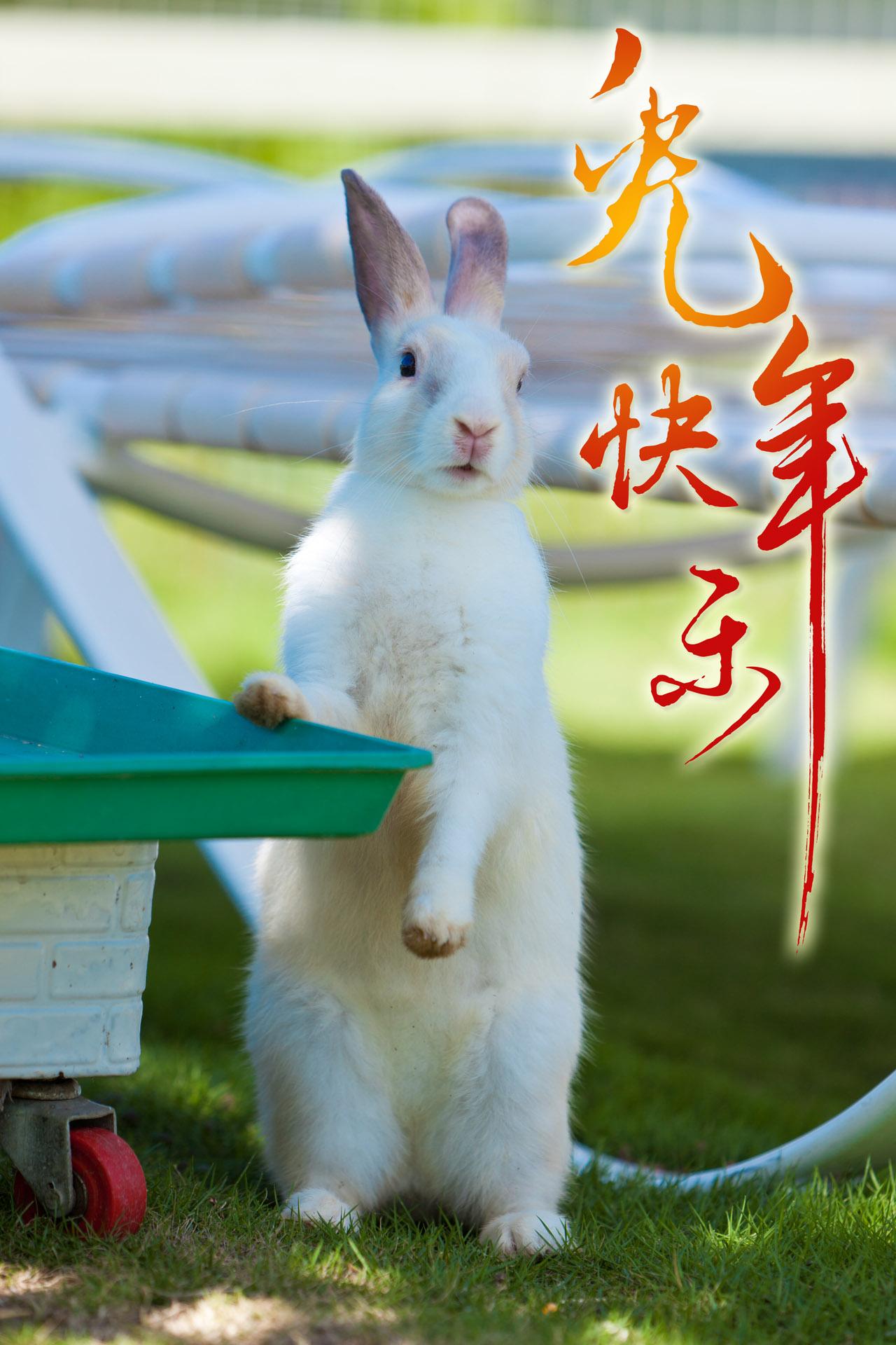 真.兔年快樂~