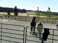 100_3721 (obsidianmoonranch) Tags: horses horse horsebackriding friesian parelli horsemanship naturalhorsemanship parelliclinic marcrea