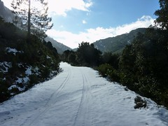 Piste forestière du San Petru : la piste déjà empruntée par un véhicule de l'ONF