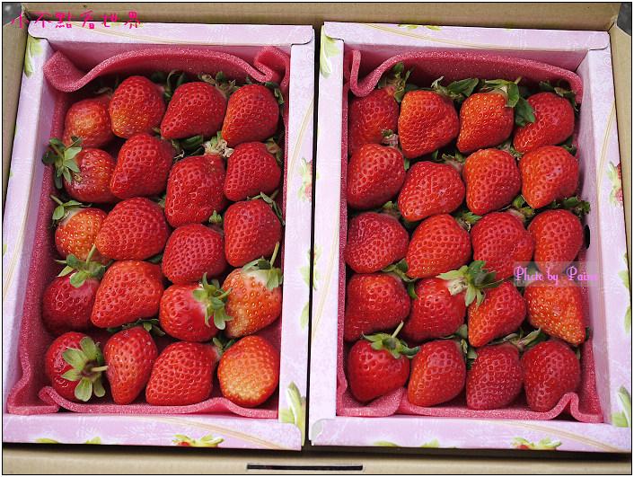 甜柿先生-草莓 (3).JPG