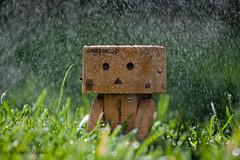 Rain... ( Hector Alonso) Tags: toy amazon yotsuba danbo boxman revoltech danboard danboo